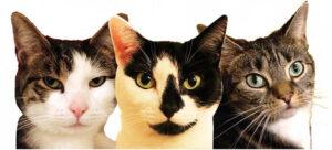 HM Cat HQ
